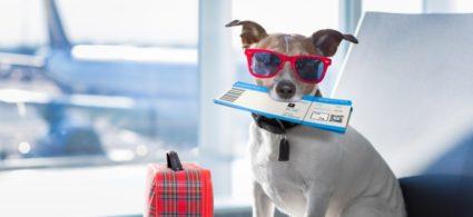 Volare con cani e gatti: come farli viaggiare in aereo